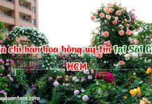 địa chỉ bán cây hoa hồng ngoại